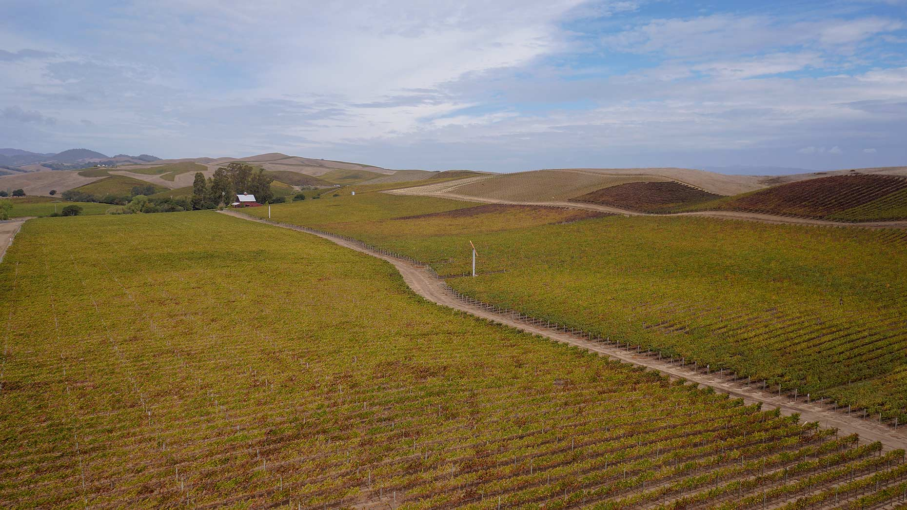Carneros-vineyard-aerial-Tinacci