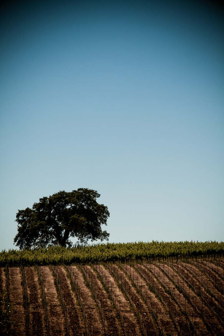 Commercial wine, travel and hospitality photographer in Napa Valley Jason Tinacci