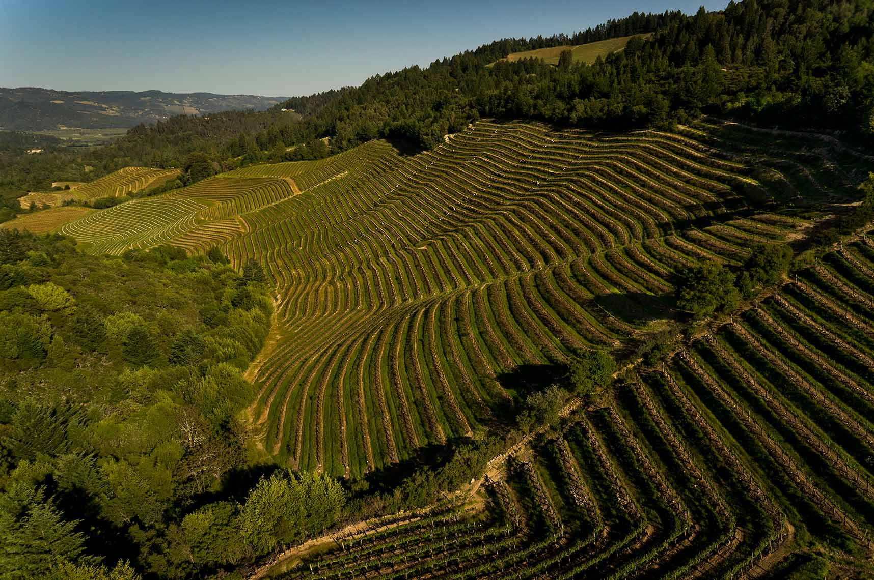 Jason Tinacci - Napa vineyard aerial photography