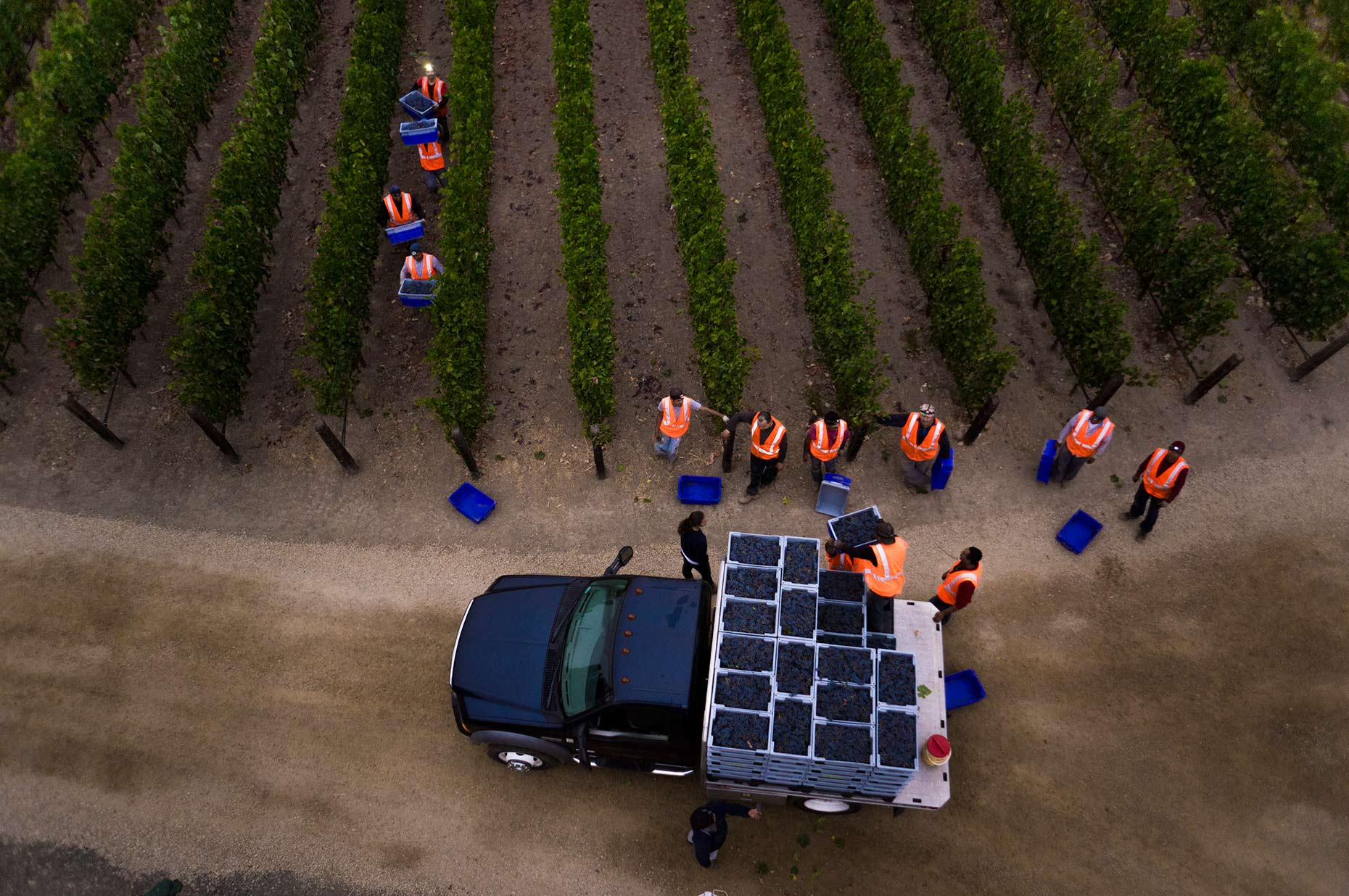 Napa Valley wine grape harvest aerial photography by Jason Tinacci