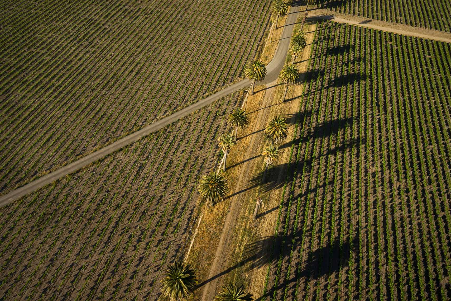 Jason Tinacci - Aerial photographer, Sonoma, California