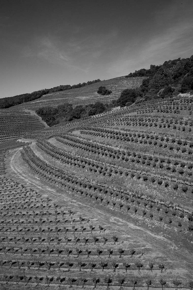 Vineyard aerial photography in Sonoma by Jason Tinacci
